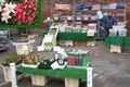 Acorn_Nurserys .. Flowers, Pet and Bird Food